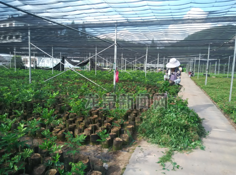 市林科院管理四项举措加强苗木管护