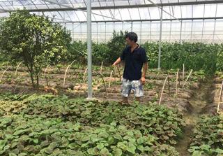 高温天气蔬菜价高