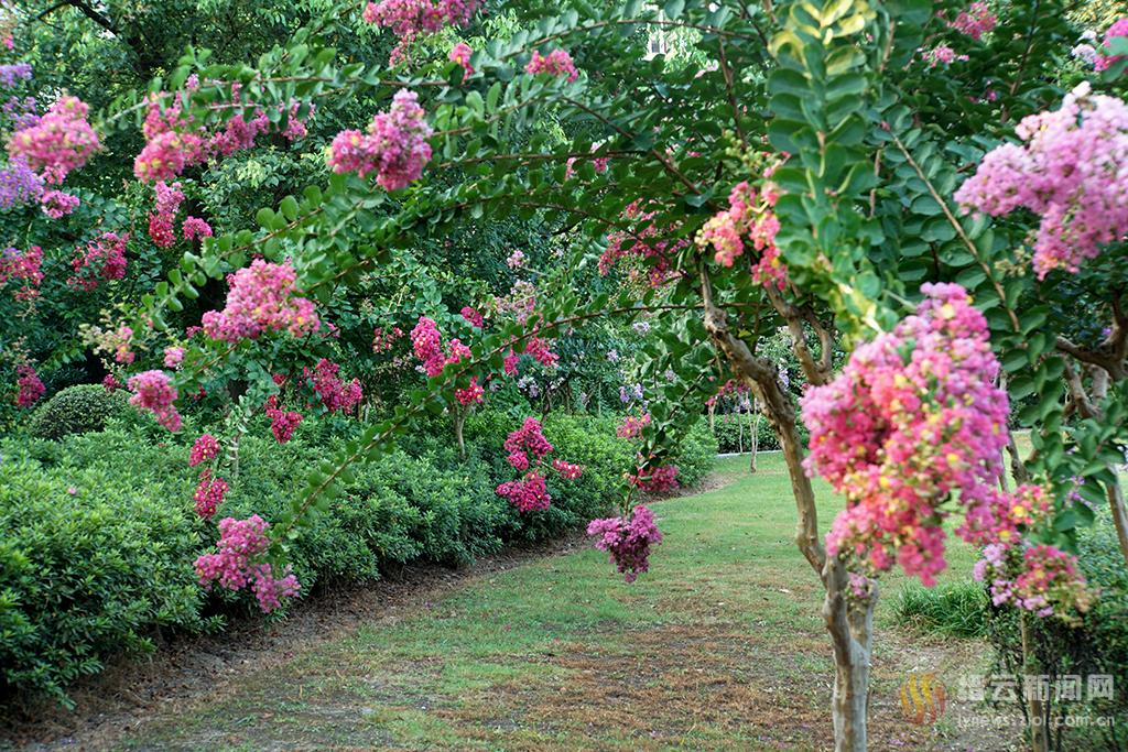 姹紫嫣红满公园