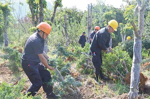 大明市区块集中清除抢种花木