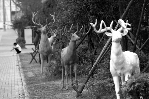 """""""驯鹿""""出街"""