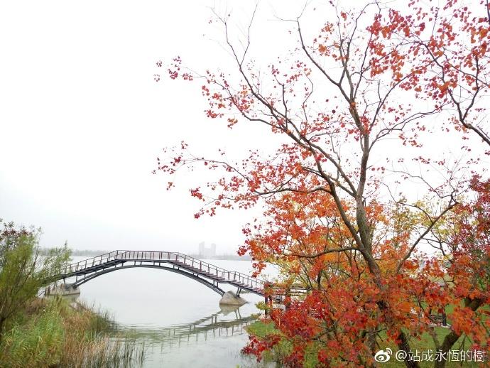 站成永恆的樹:过去五年,我大海宁的环境越来越美