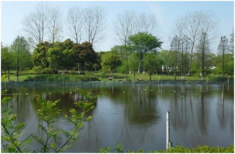 烟雨南湖,运河古城