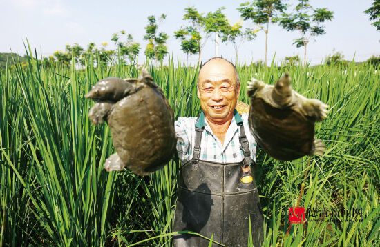 生态养殖助增收