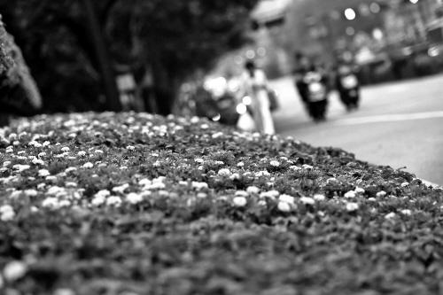 花草扮靓街头