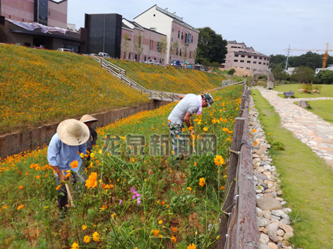 市建设局开展苗木绿化补植