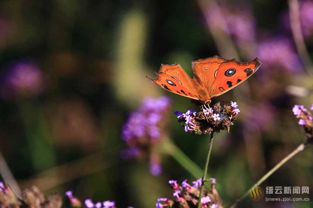 彩蝶舞花径