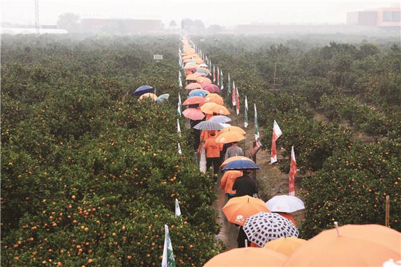 2017年台州・黄岩旅游柑橘节开幕日集中活动剪影