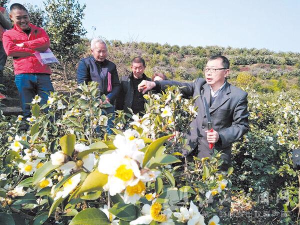 油茶生产技术培训
