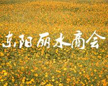 【专题】东阳丽水商会