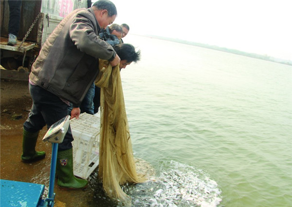 10万尾鱼苗放流衢江