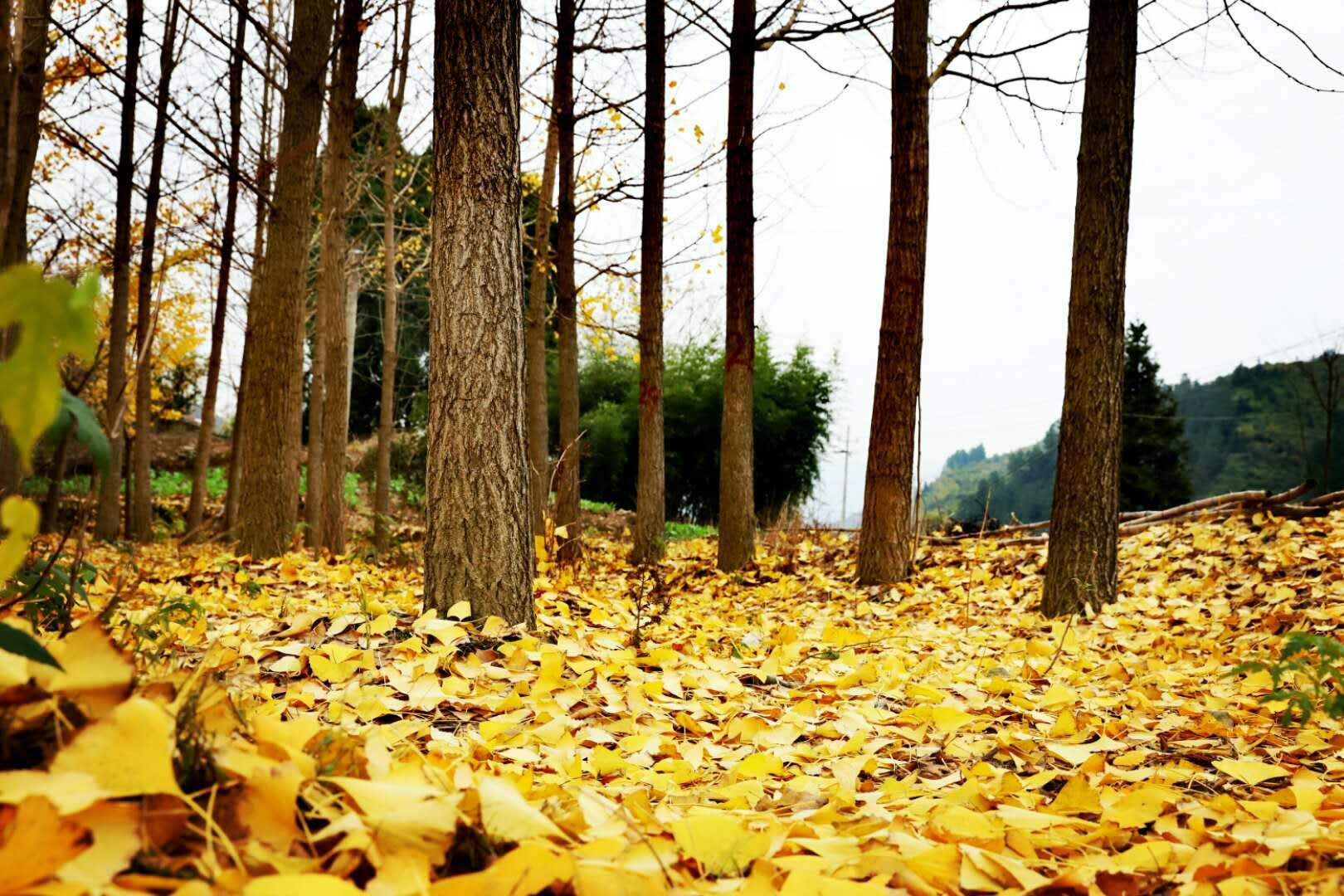 慢城常山的那些深秋之美