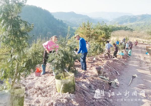 香榧树美乡村