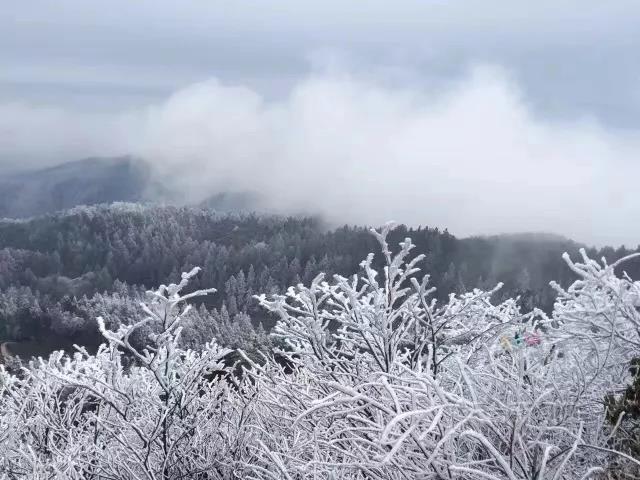 一场树与冰雪的奇缘 一场冰雪王国的盛宴