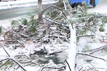 城区1500棵行道树受损 相关部门及时出动清雪