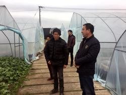 市农林局领导专家深入一线开展抗灾防寒工作