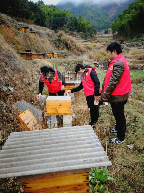农业局工作人员在锦溪镇指导中蜂防冻工作