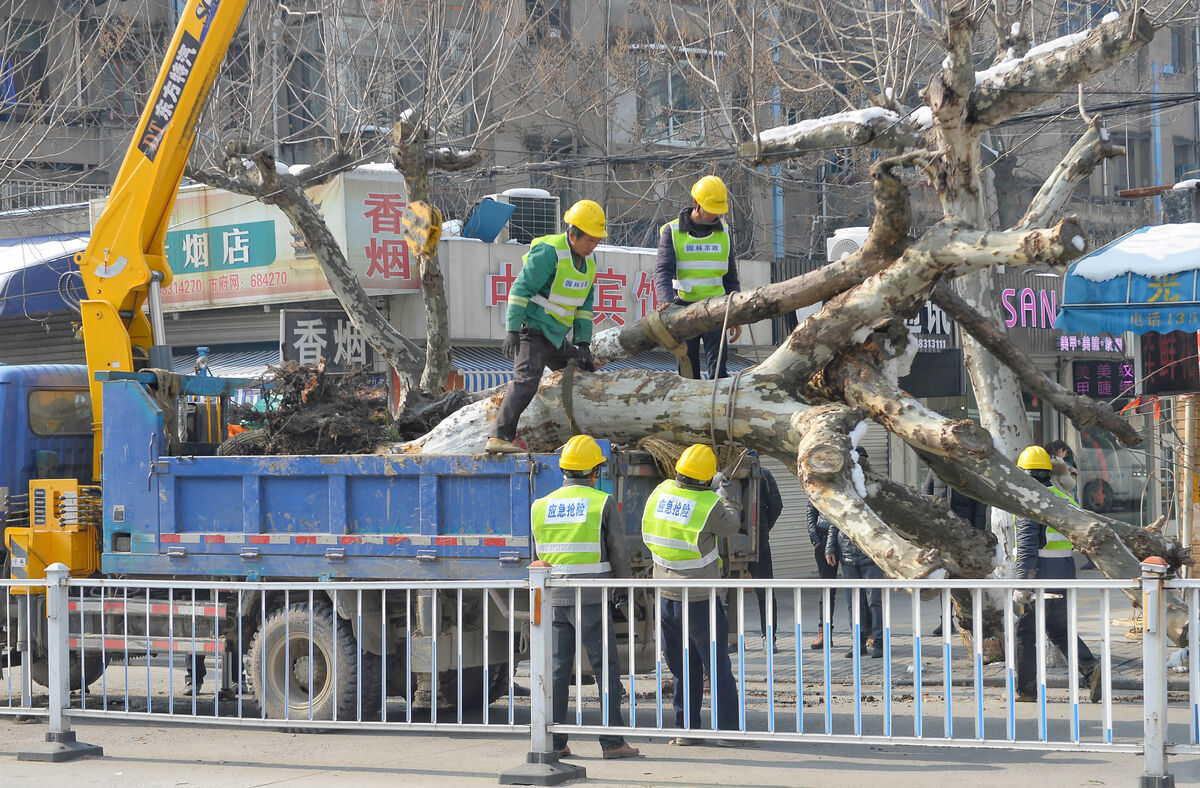 移树木保安全
