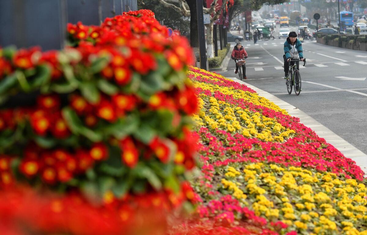 花争艳 迎春来