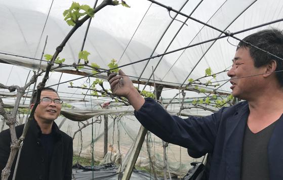 春耕节前遭遇寒潮 市农林专家现场指导果农降低损失