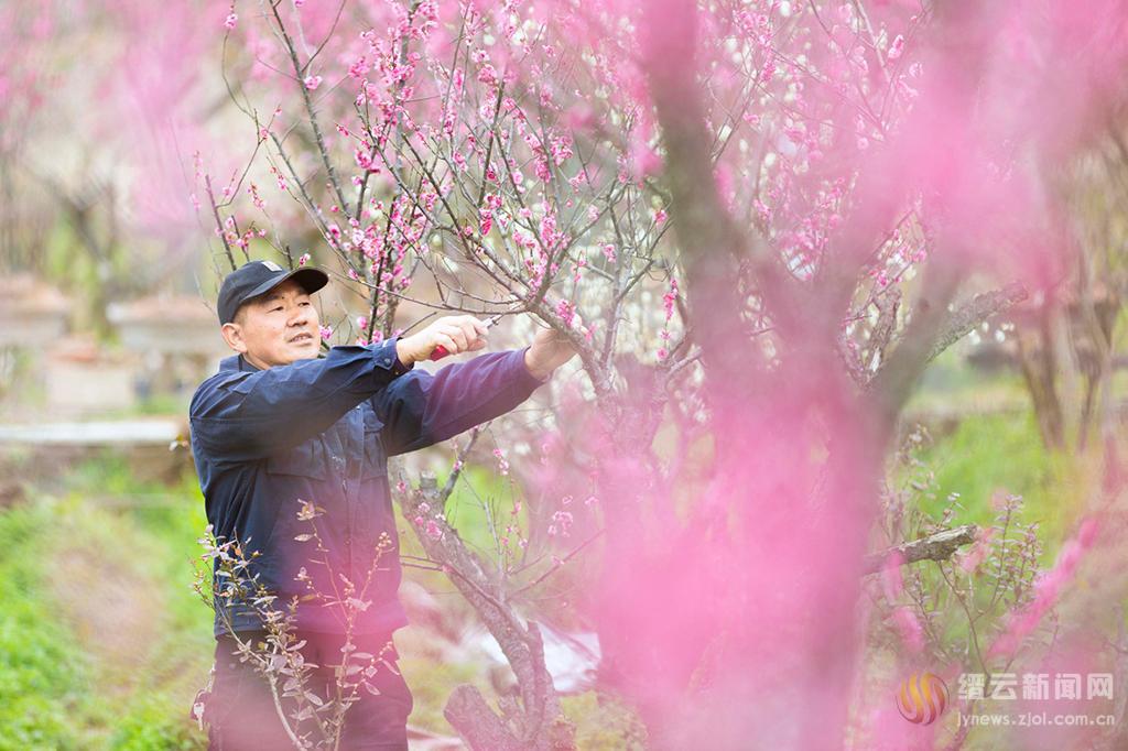 """梅树种植 打造""""梅""""文化"""