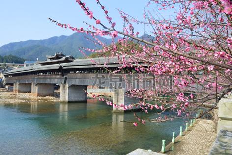 小梅镇龙庆桥旁的梅花次第盛开