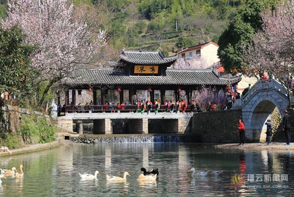 双溪口第八届姓潘杏花节成功举办