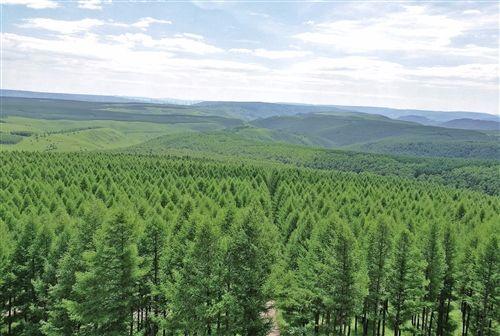 2017年全国完成造林730余万公顷