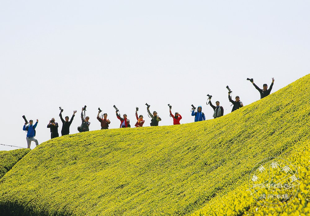 杭城拍客 茶乡采风