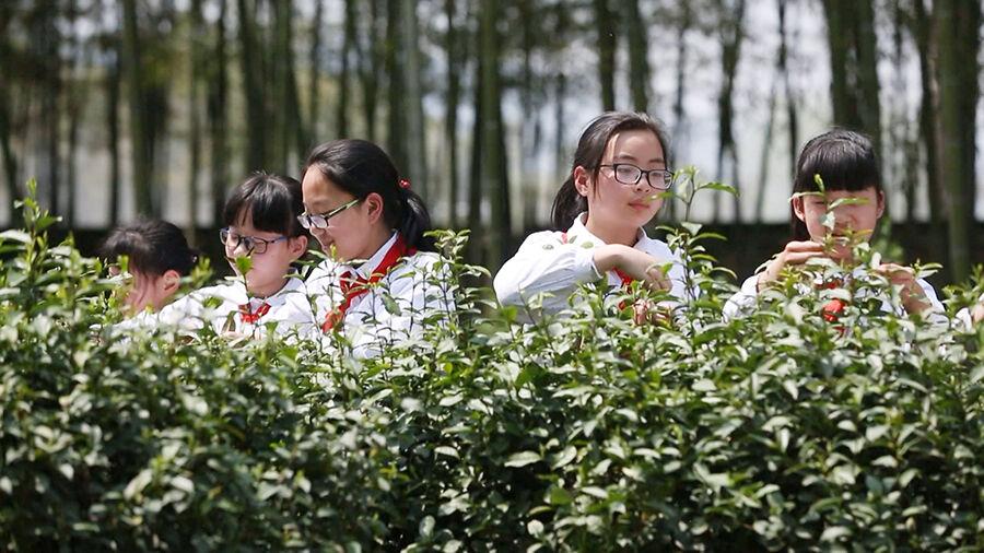 """茶文化""""飘香""""校园"""