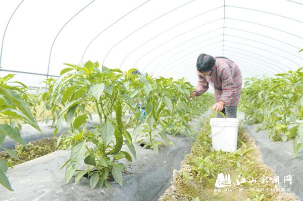 扶持建设蔬菜基地