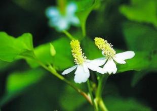 """5类植物是天然""""消炎药"""" 这些食物最补血、抗血栓"""