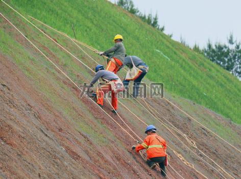 工作人员在G322国道(原53省道)安仁至西街段进行边坡绿化
