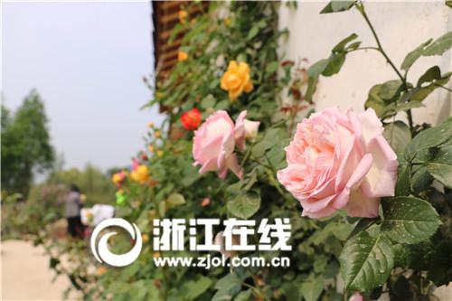 国际玫瑰文化节开幕 吴兴美妆小镇加快全产业链发展