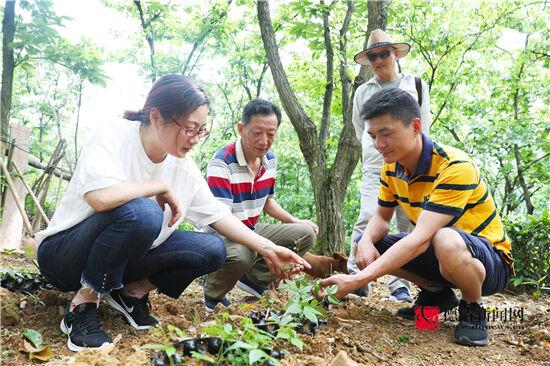 林下套种 促农增收