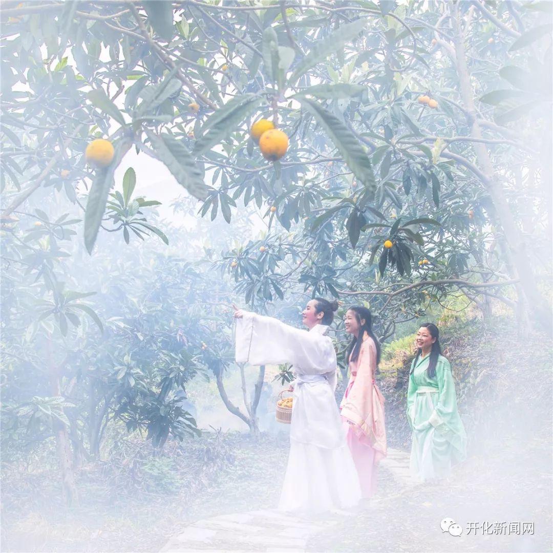 定啦!5月27日,青山枇杷节!甜过初恋的果子、七大活动,就等你!
