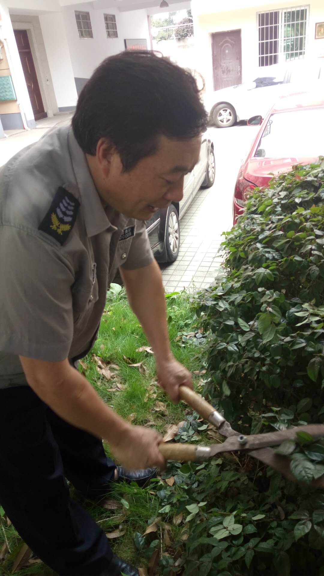 泰和公寓志愿者植被修剪活动