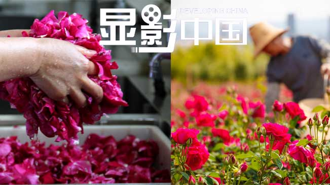 """云南一高校用鲜花做菜成""""网红"""""""
