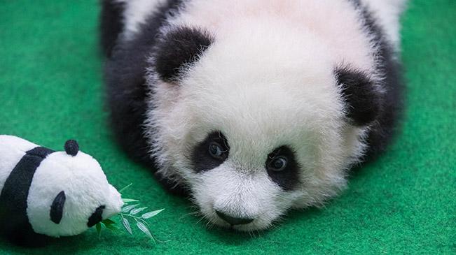 我们都爱大熊猫