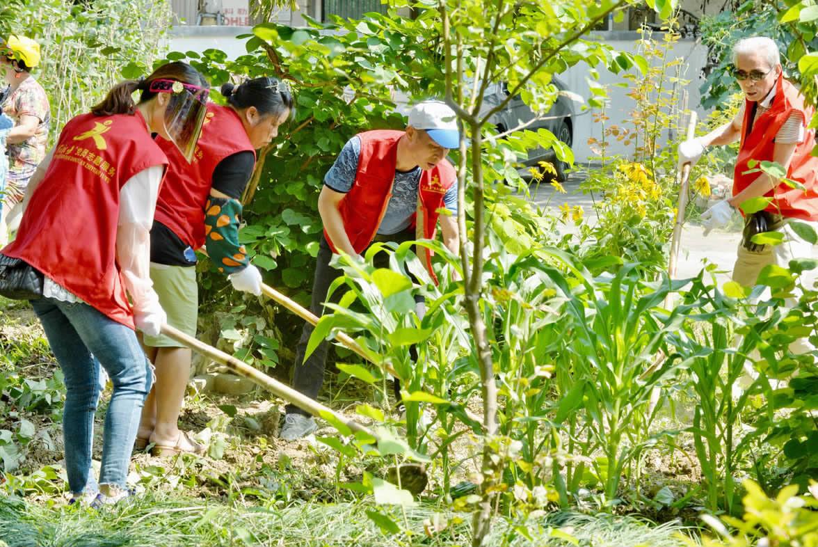 志愿服务扮美家园