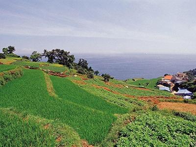 农村集体产权制度改革试点扩大