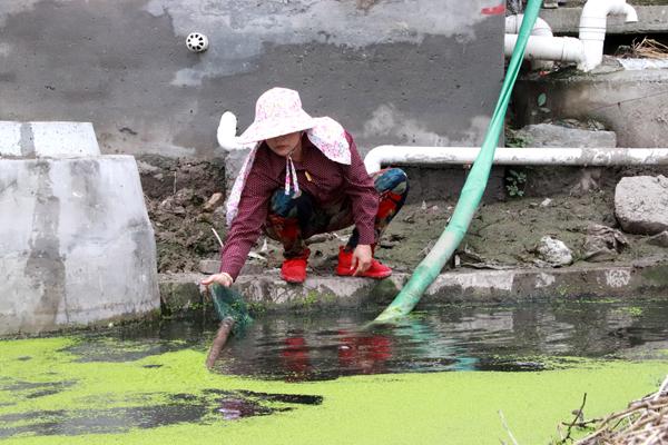 """在楚门,有个治水""""女管家"""""""