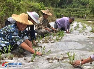 借助农业基础优势 打造农耕岭头