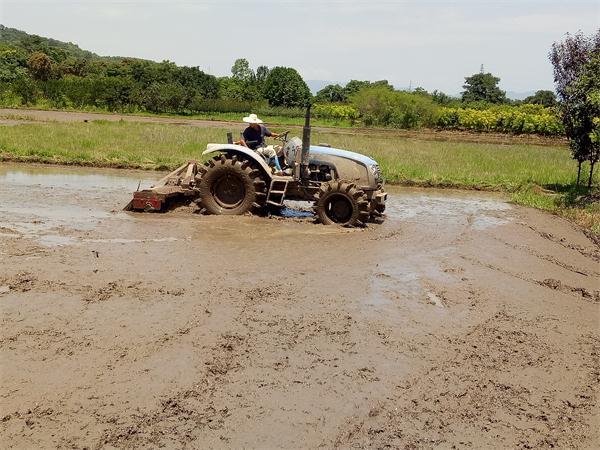单季稻耕种忙