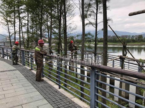 市城投公司与市园林处对江滨南岸文化长廊内的枯枝进行清理