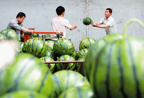 夫妻在东阳这样卖西瓜被处罚!今年以来共查处65起!