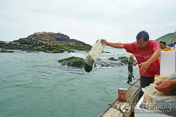 2亿多粒厚壳贻贝苗种在我县海域放流
