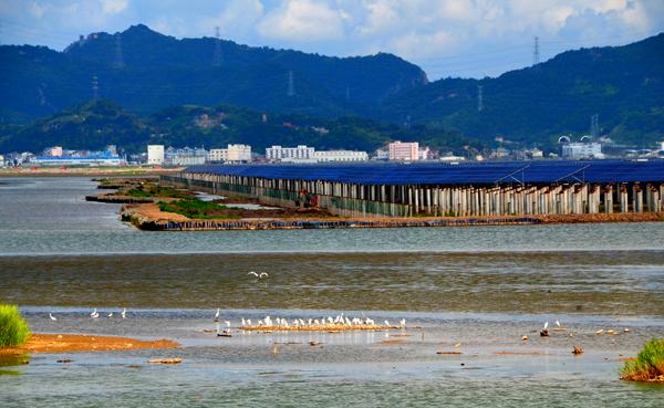 玉环: 海涂荒滩建光伏