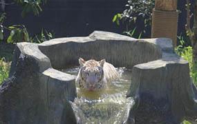 常州动物园花样降温上演动物另类避暑大戏