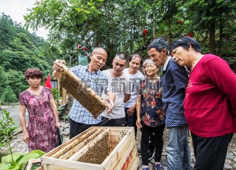我市利用得天独厚的养蜂优势 大力发展中蜂产业